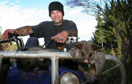 VISITOR BAIT: Pipiwai trapper George Niha with a possum destined to become the filling for gourmet pies, a wild food treat aimed at attracting visitors to the Northland Regional Council&#39;s annual Field Days marquee.