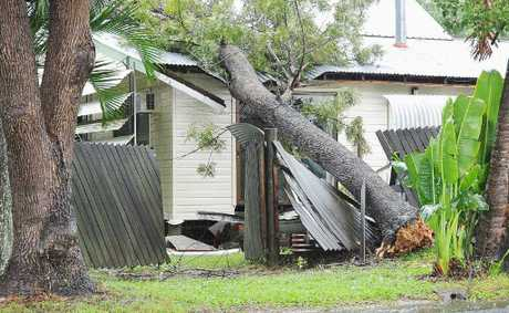 This tree fell on Steve Walker's house on Iindah Rd, Tinana, hitting his bedroom.