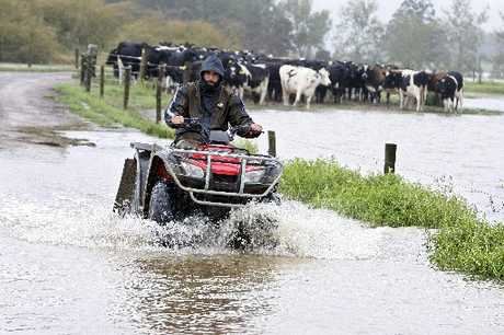 TERRIBLE TIMING: Farm manager Jesse Bagley returns from checking on a mob of cows on the Lammers farm, Hikurangi swamp.