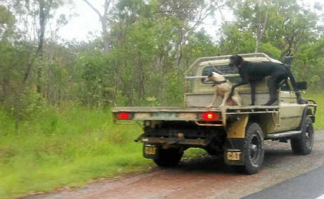 Two dogs illegally restrained on the back of a tray-back ute in Gladstone.