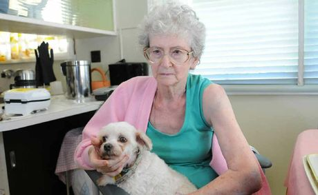 Little maltese Snowy fought above his weight to defend owner Dorothy Jacobsen when she was attacked by a dog Monday.