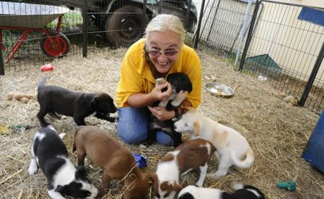 Sally Rogers, of Happy Paws Haven, with some of the dogs and puppies at Happy Paws.