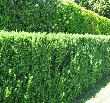 If you are planting hedges - think ahead. 