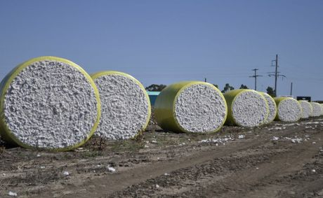 Cotton prices dipped after a sharp rise.