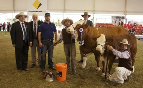 WINNERS: Gary Noller (judge) Peter Speers, Stephen Lean, Marty Rowlands and Les Lee with the winning stock from KBV Simmental stud.