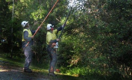 Essential energy crews trimming vegetation under power lines near Bellingen.