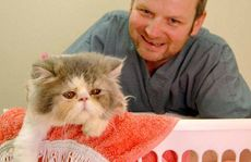 Better Pet Vets Dr Ashley Young with Me-lu, the Persian cat who survived after accidentally going through a full cycle in the washing machine.