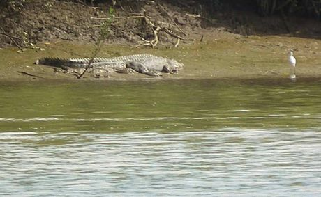 Rangers took this photo of the croc on the banks of the Mary on Tuesday. INSET: Wayne Gosley and his sister Dale Parker with a croc shot in the Mary between Tiaro and Maryborough.