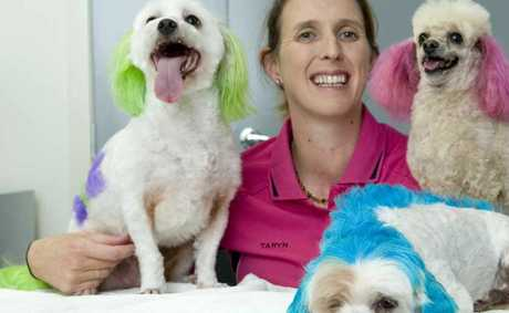 Dog groomer Taryn Binstead has coloured Gypsy, Scooby and Tiffany all ready for the RSPCA Million Paws Walk on May 20. Photo Kevin Farmer