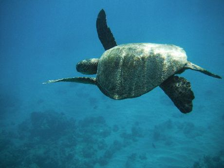 The snorkeling in Oahu is brilliant, says David Smith.