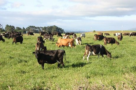 Agriculture is Northland's fourth largest industry and biggest employer with dairy, beef, deer and sheep farms all represented in the region.