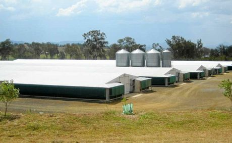 Chicken growing sheds similar to those above are proposed for a site at Elbow Valley. The average Aussie eats nearly 40 kilos of chicken a year.