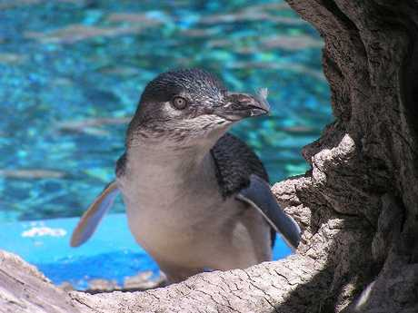 The penguins at Napier's Marineland are to be rehoused at the National Aquarium down the road.