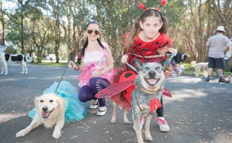 RSPCA Million Paws Walk, Coffs Harbour.