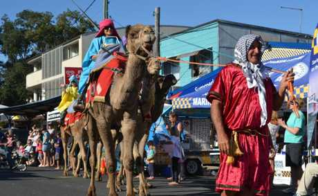 DESERT SHIPS: It's not often Oak Street, Evans Head sees camels travelling down the road. Photo Samantha Elley / Rivertown Times