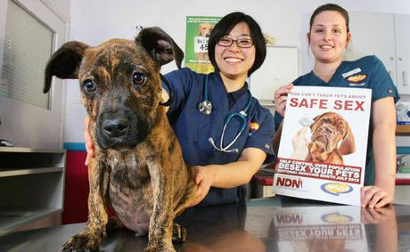 Veterinarian Akane Nakagawa and vet nurse Taleah Kruger, with Rusty, are promoting the new desexing campaign.