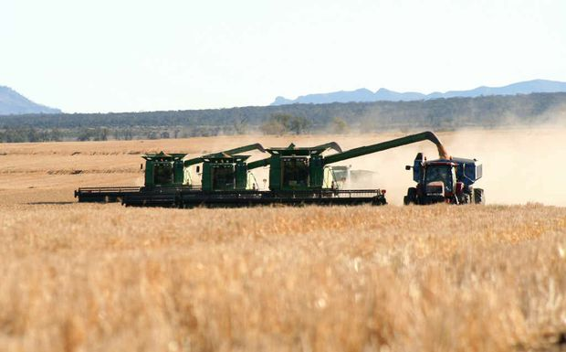 Wheat harvest time in the Golden Triangle.