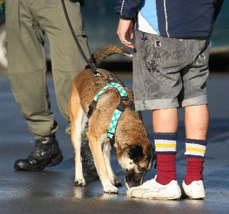 Dogs regularly check visitors to Ngawha Prison.