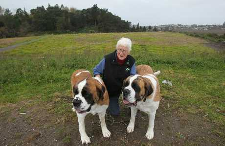 IT'S A DOG'S LIFE: Tauranga Kennel Club member June Lawson and her Saint Bernards at the special area of Cambridge Park earmarked for use by members of the city's dog clubs.