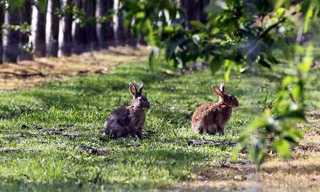SOLUTION: Scientists have found a way to kill pasture-thieving rabbits with less 1080 poison.