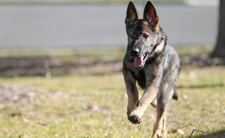 Sunshine Coast police dogs quickly put an end to a house party at Buderim.