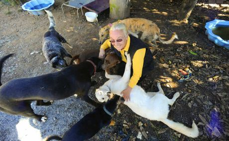 Happy Paws Haven manager Sally Rogers has been told by Clarence Valley Council to remove all the dogs from her Eatonsville property by the end of the month.