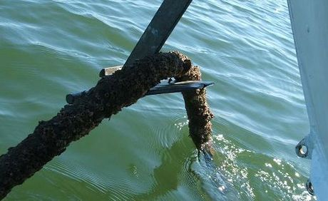 An old copper Telstra cable is causing concerns for boaties and environment groups