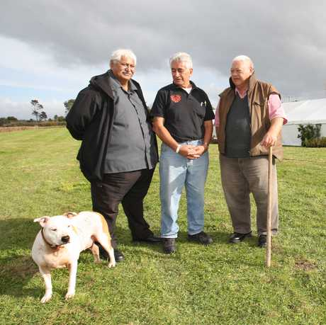 Ngati Ranginui iwi chairman Huikakahu Kawe flanked by Ngaitamarawaho hapu kaumatua Des Tata (left) and Peri Kohu at the Te Ranga battlefield yesterday where the scene of today's Treaty settlement signing was taking shape.