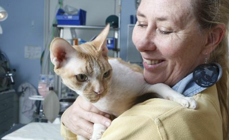 The Animal Welfare League QLD will be holding a cat desexing campaign during July and August. Raceview Vet Clinic owner Belinda Dare with Ginger.