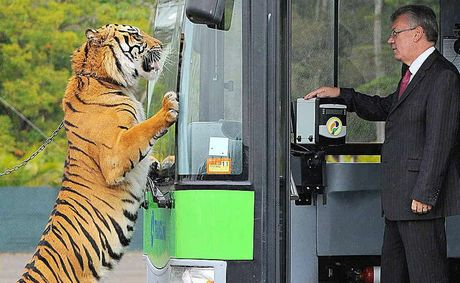 Tiger Juma looks excited about a bus ride with TransLink CEO Neil Scales.