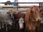 "THE risk of coal seam gas drilling affecting livestock through contaminated water supplies is ""absolutely miniscule""."