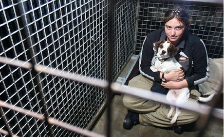 Dogs at Animal Welfare League Ipswich shelter, such as Molly the King Charles cavalier-cross-Maltese, and animal care officer Jess Mills, are hoping for donations of blankets to keep the dogs warm this winter.
