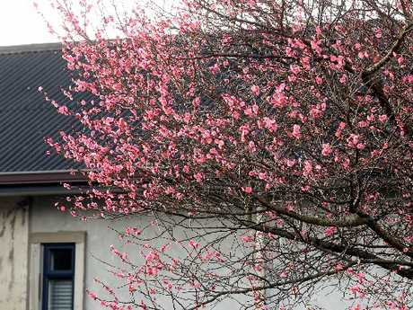 A while to go yet but this tree in Kennedy Rd, Napier, already has a spring feel to it.