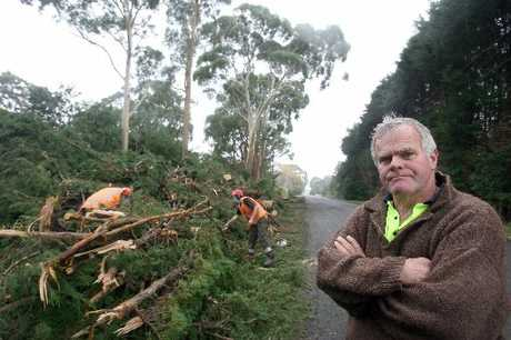 NOT IMPRESSED: Featherston resident Anthony Medcraft is unhappy the huge macrocarpa trees on the council verge of Underhill Rd are being felled.