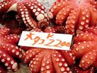 Octopus for sale at the Tsukiji fish market in Tokyo.