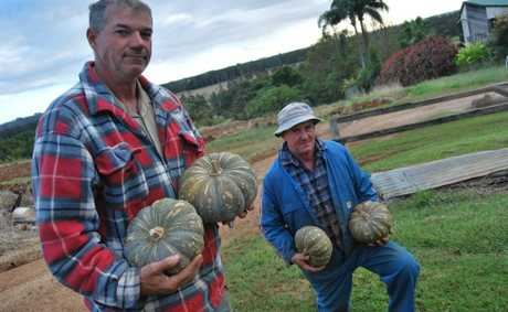 Ross and Frank Julius are hard working produce farmers from Cudgen.