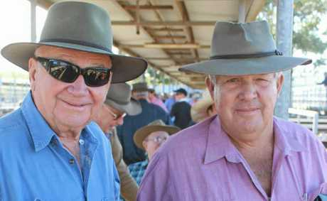 EXPERIENCED EYES: Jim Hopper and Alan Jones, both of Gracemere, cast their eyes over the offering at the CQLX cattle sales on June 22.