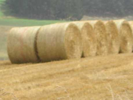 Hay and straw bales went under the hammer recently.