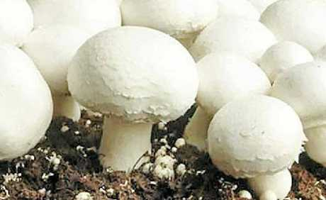 Vitamin D mushrooms will soon be available Australia-wide.