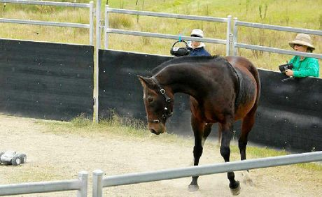 UNDER PRESSURE: Researchers have cast doubt on the Monty Roberts method.