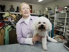 Bribie Island Animal Welfare op Shop manager June Breiteneder with rescued dog Casper the Bichon Frize. Photo Vicki Wood / Caboolture News