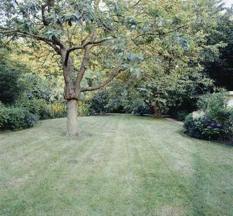 A large lawn and tiny garden beds do not a marriage make. The proportions of this lawn work beautifully with the big tree and the substantial plantings around the edge of the grass.