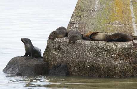 The long-term future of the remaining two sea lions and seven seals at Marineland is yet to be resolved.