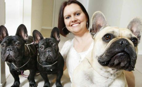 Melissa Greenall with her three French Bulldogs that will be competing at the Brisbane Ekka. Mum Bailey (right) with her two puppies Adelle (left) and Quid.