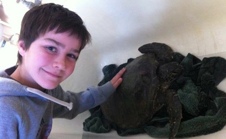 Josh Kook, of Kingscliff, with the ailing green turtle he and his dad found on Friday.