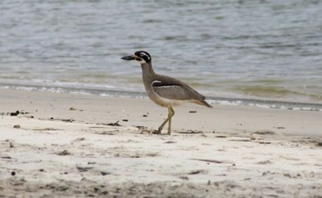 A photographer claims she spotted this rare bird near Cudgen Creek.