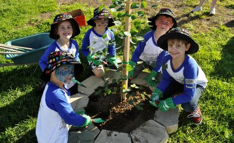 Local school children get involved in National Tree Day by planting trees and flowers outside the Dalby PCYC on Friday. 