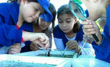 ENVIRONMENTAL INVESTIGATIONS: St Anne's Catholic Primary School students Abbie Robinson, Jain Gauci and Aaliyah Turner using aquatic bugs to find out about water quality.