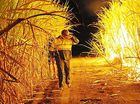 BUNDABERG'S sugar industry is facing the prospect of a lean harvest as cane growers are caught between the lack of rain and high electricity prices.