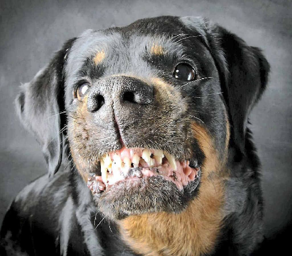 Vicious Dog Breeds Ffc_11-08-2012_news_03_killer. ...